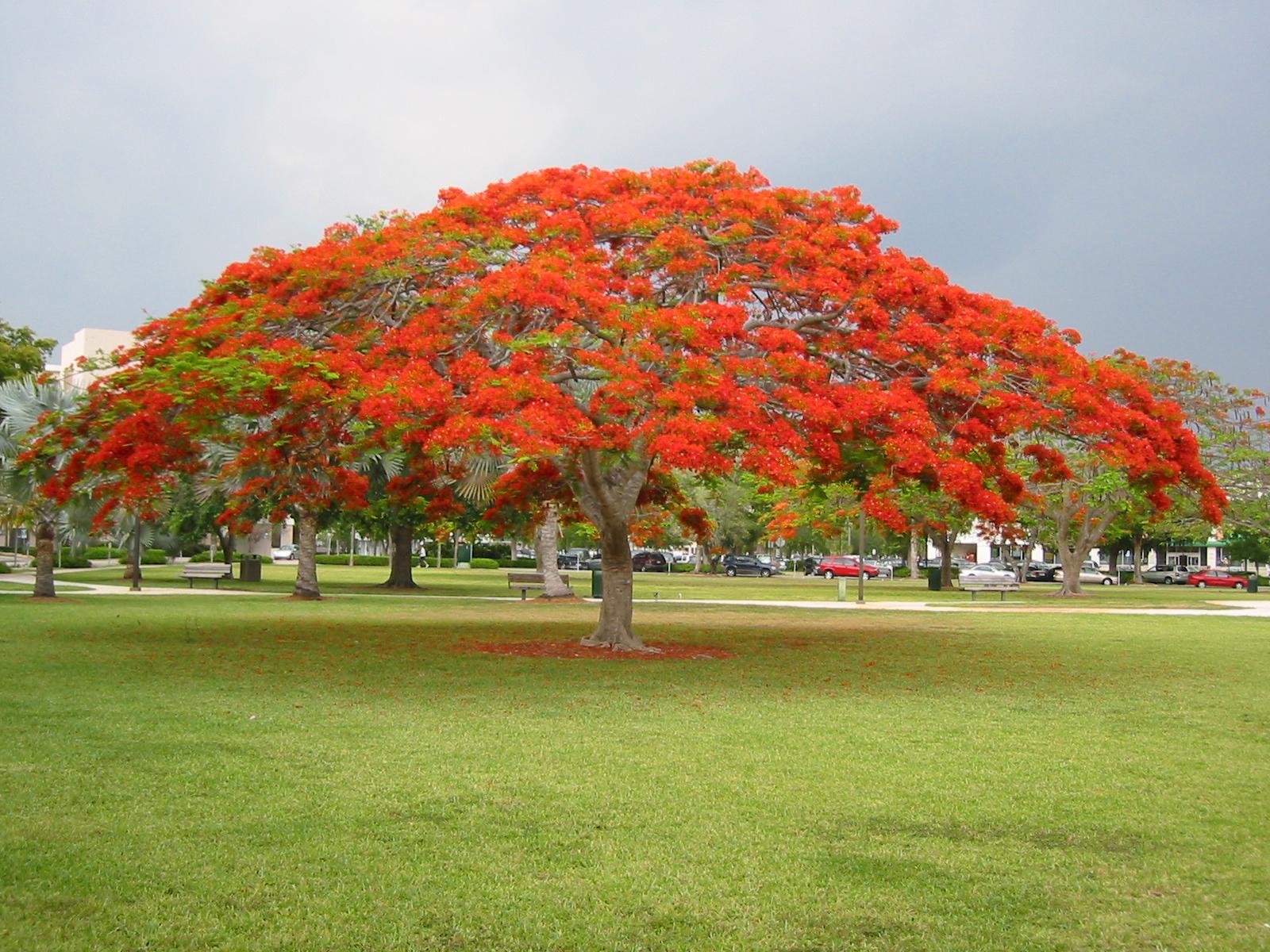 Shade Plants Under Trees